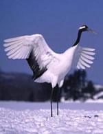 White Crane - Wing Chun, Hung Ga or Karate?